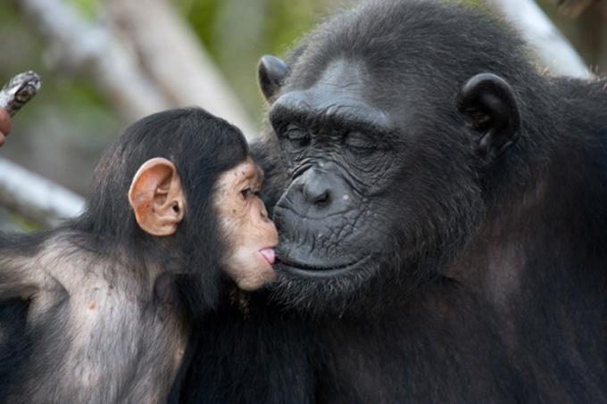 Какие животные целуются