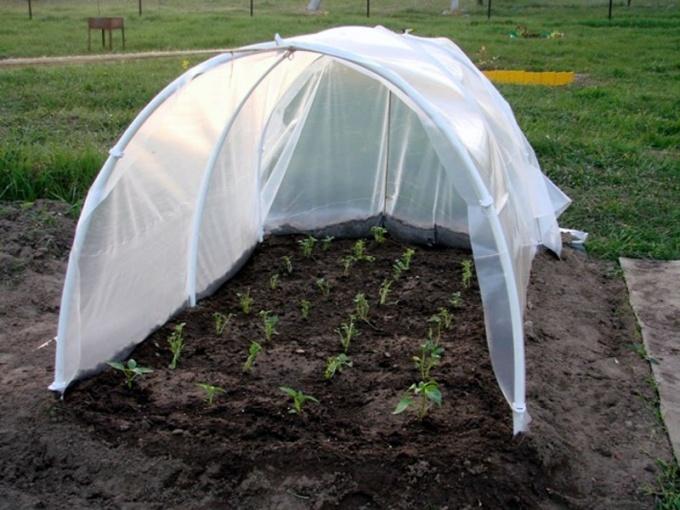 Защита сеянцев от холода при помощи дуг и пленки