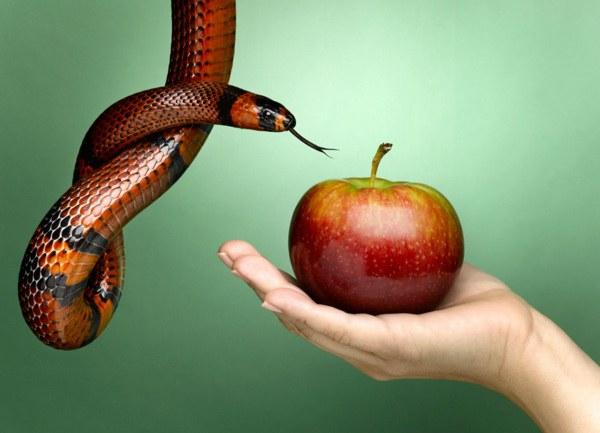 Какой плод вкусила Ева