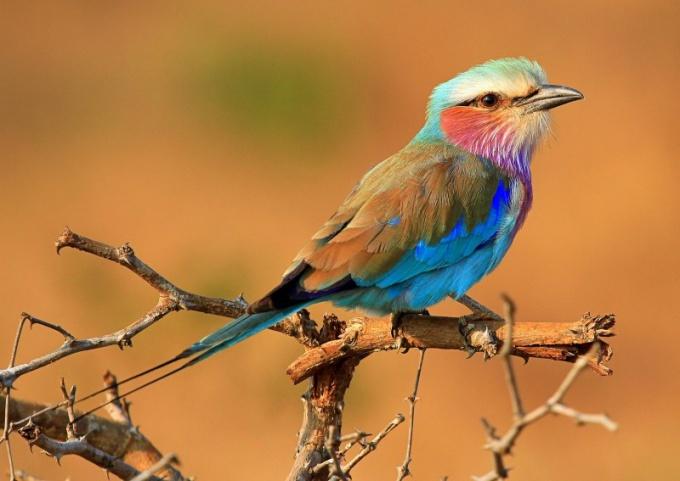 Боязнь птиц можно преодолеть