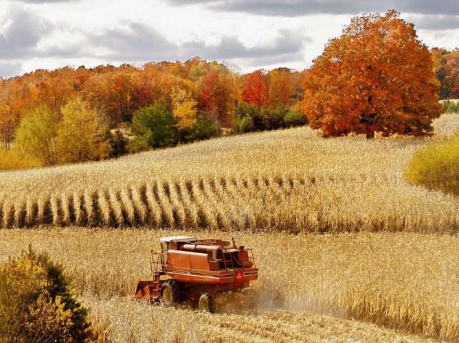 Может ли сельское хозяйство обойтись без дотаций