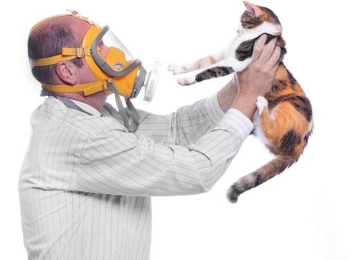 Можно ли заводить кошку, если есть аллергия на пыль