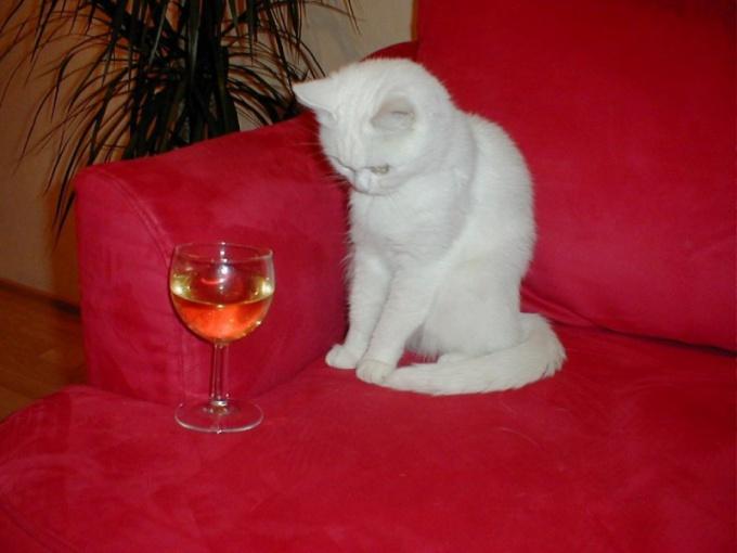 Как перестать пить
