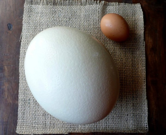 How to open and cook a ostrich egg