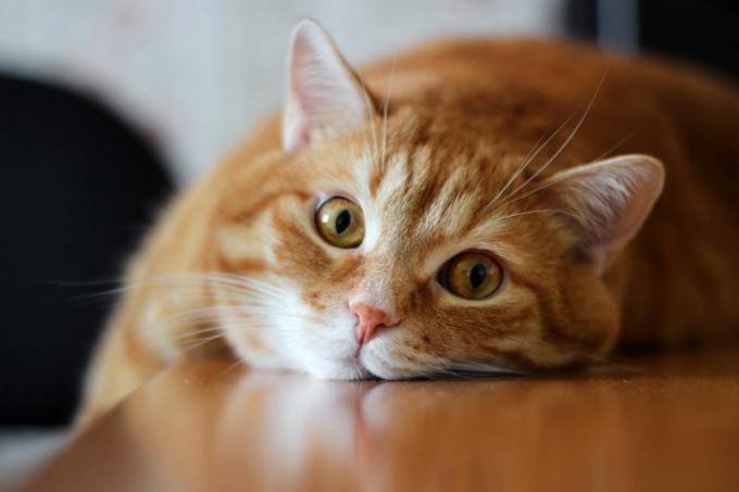 кот пометил как убрать запах