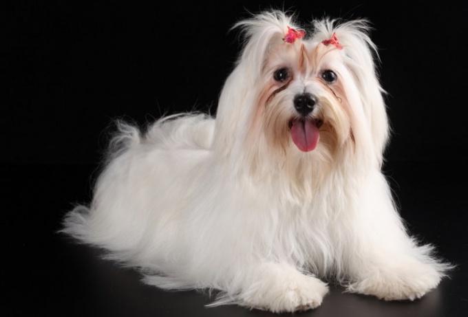 Какая порода собак подходит для новичков