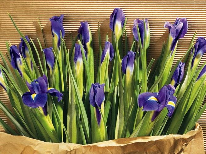 Какие цветы можно дарить мужчинам