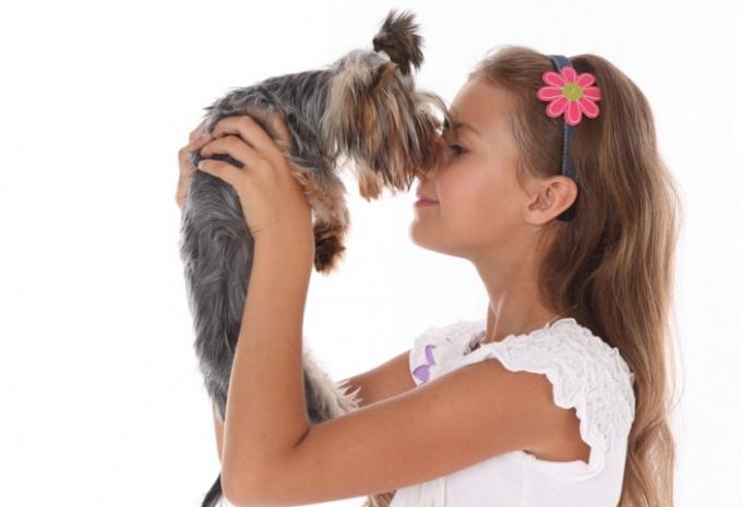 Кого подарить ребенку - собаку или кошку