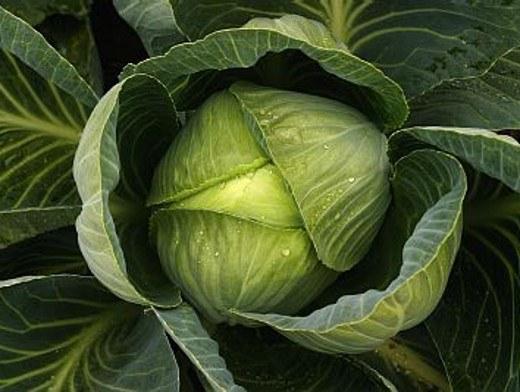 Как приготовить капустный сок для похудения
