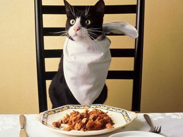 корма для котов относятся к классу премиум