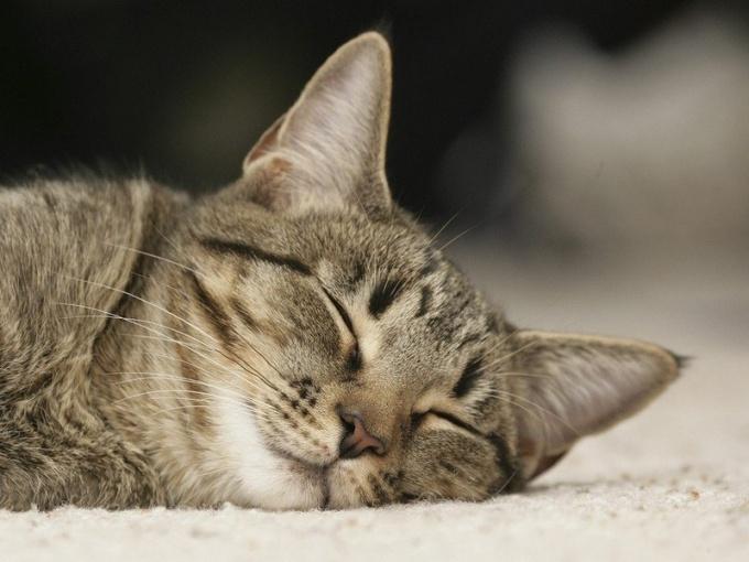 Как трактовать сны про котов