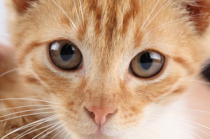 Смотрят ли домашние животные телевизор