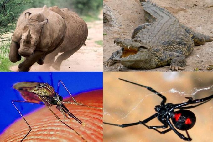 Какое животное самое опасное для человека