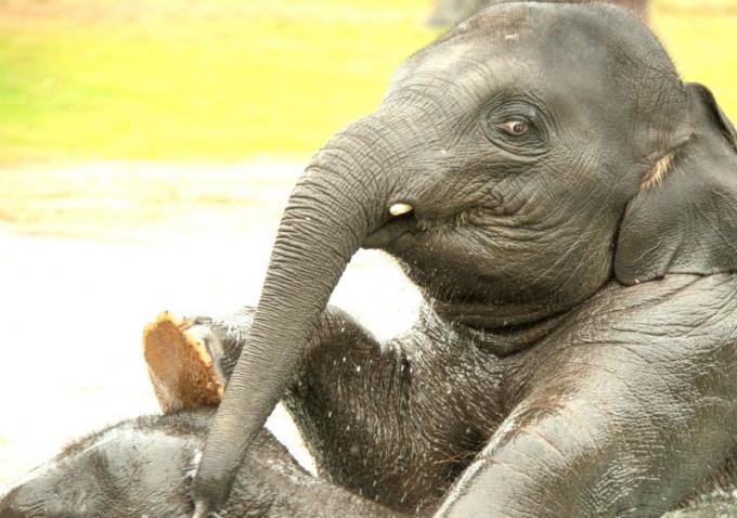любят слоны