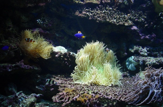 Как выбрать настенный аквариум