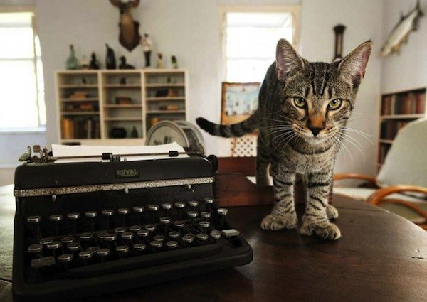 Каких кошек называют котами Хэмингуэя
