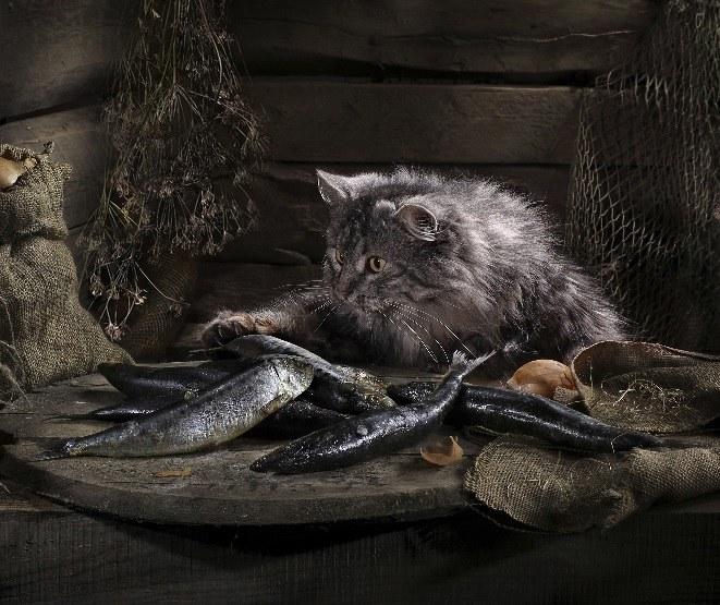 Отчего кошка не ест рыбу