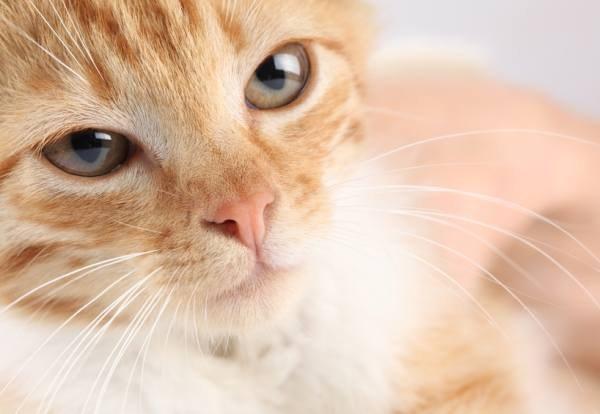 Причины появления корок на носу у котов