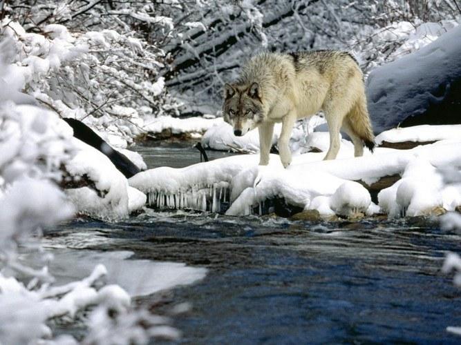 Что лесные звери пьют зимой
