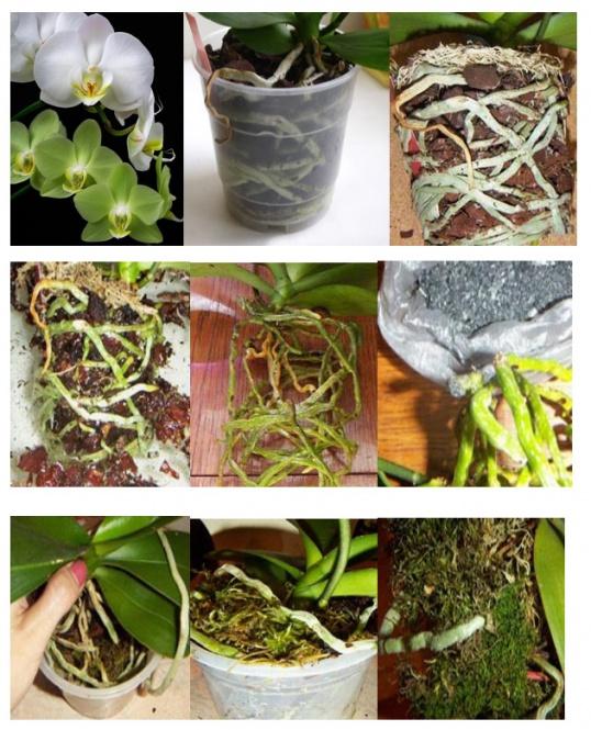 Как правильно пересадить домашнее растение
