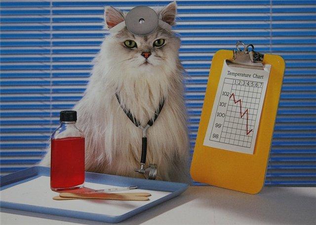 звериные врача