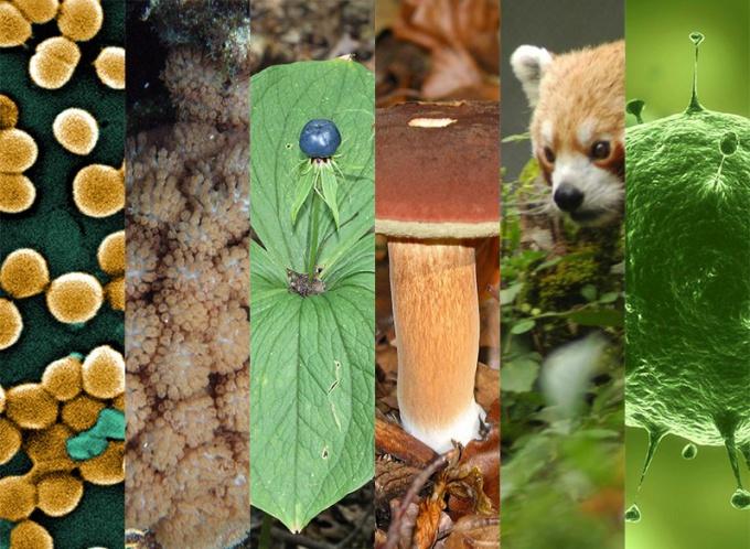 Какие царства живых организмов выделяют в природе