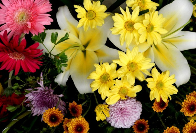What flowers to give different signs of the zodiac