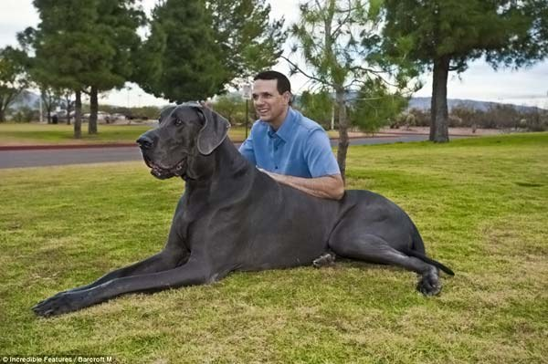 маленькая и самая большая породы собак в мире