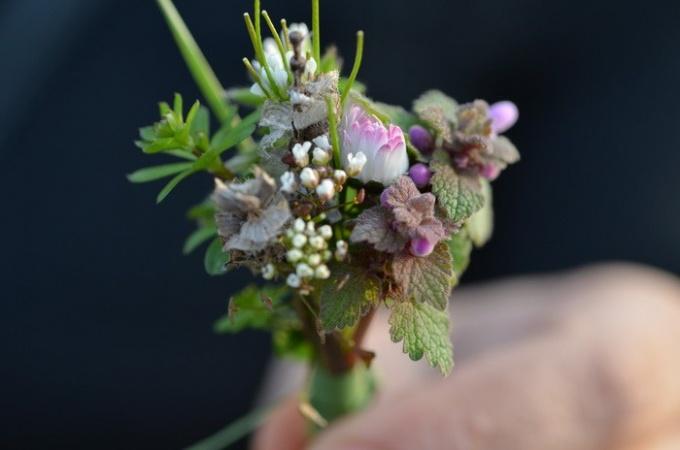 Букет из каких цветов лучше подарить на 1 сентября