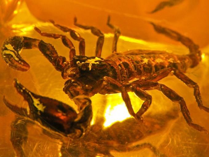 Что подарить Скорпиону