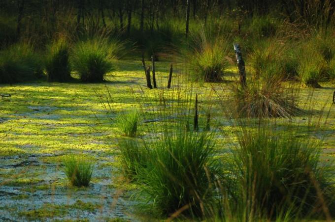Какое болото самое большое в мире и как оно выглядит