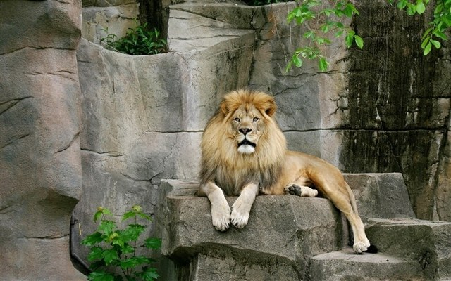 Почему лев считается царем зверей