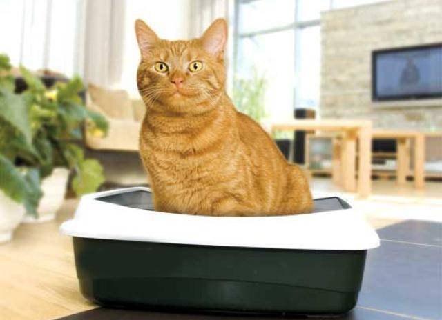 наполнитель для кошачьего туалета своими руками