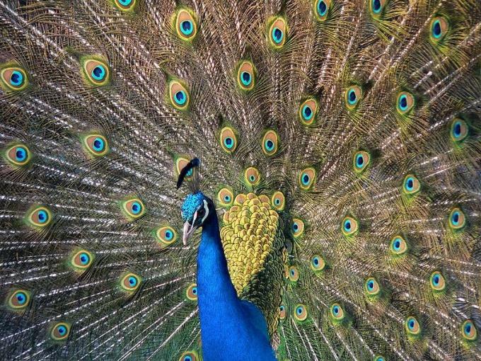 Какая птица самая красивая в мире