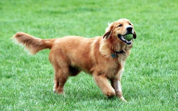 Какая собака самая добрая
