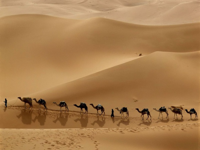 Что означает выражение «собаки лают караван идет»