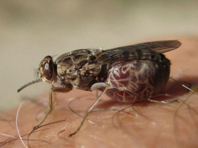 Самые страшные насекомые