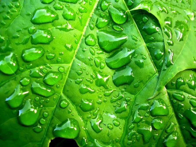 Как дышат растения