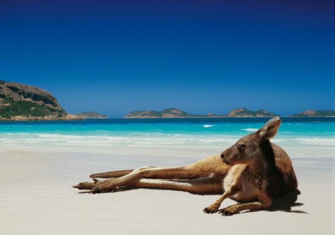 Почему в Австралии нет крупных хищников