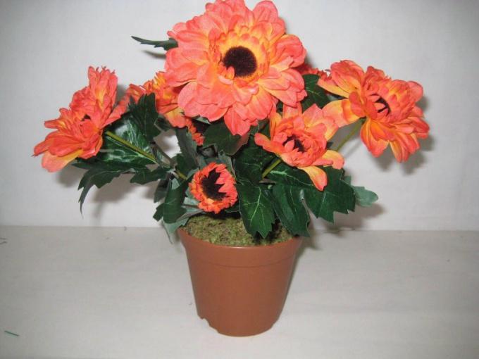 Какой цветок в горшке в подарок лучше всего выбрать