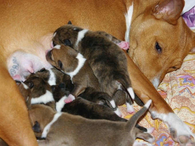 кормить собаку после родов