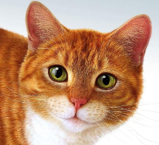 Когда делать кошке стерилизацию