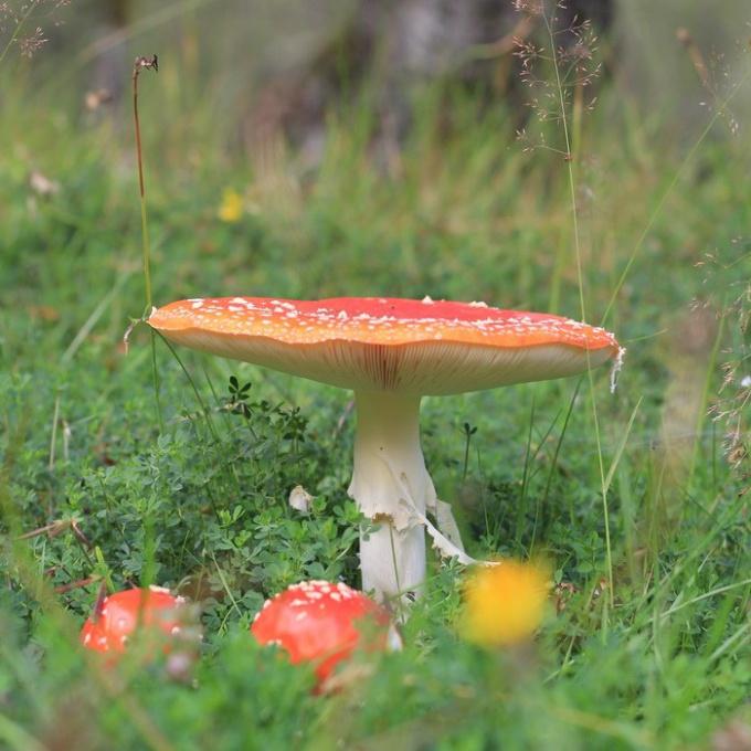 Можно ли есть грибы беременным