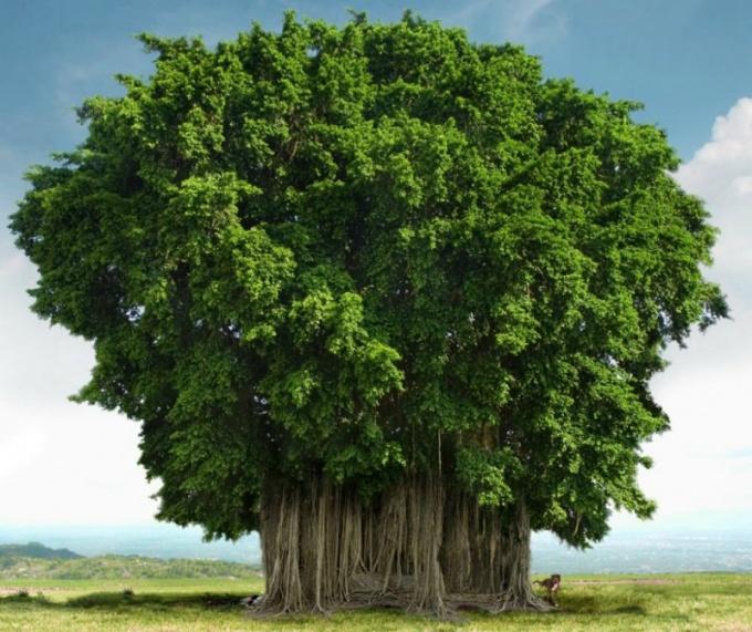 Самые красивые деревья