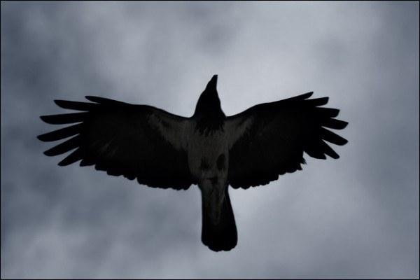 О чем сериал «Черный ворон»