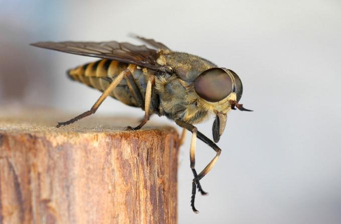 Какие насекомые переносят заболевания