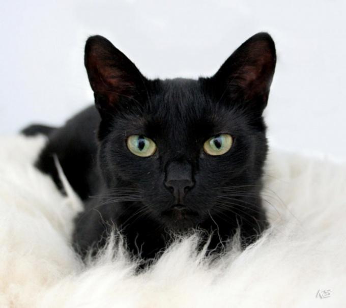 Что будет, если черная кошка перебежала дорогу
