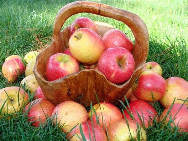 2 - 3 яблока в день - и вес будет в норме