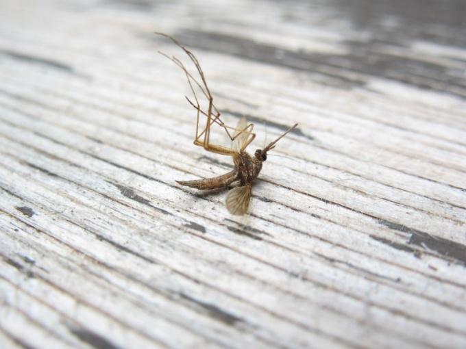 Вредны ли спирали от комаров