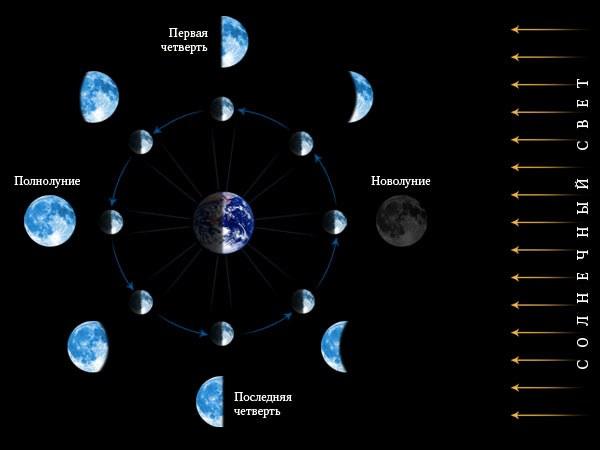 Для чего необходим лунный календарь при работе в огороде